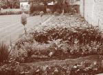 gardening_c