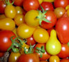 colourful_tomatoes1